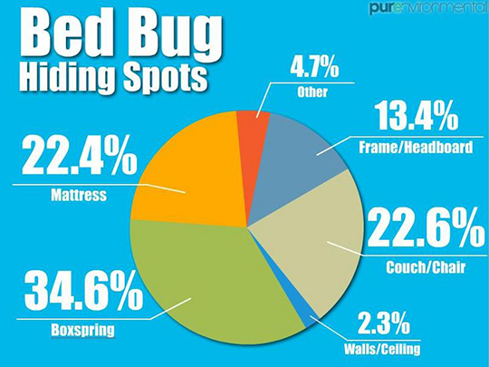 bed bug hiding spots