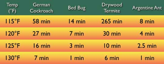 bed bugs treatment temp