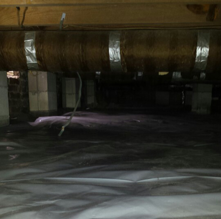 remove mold mildew crawlspace