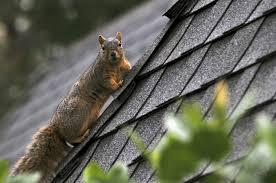 squirrel-damage