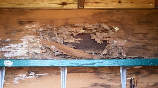 termites removal